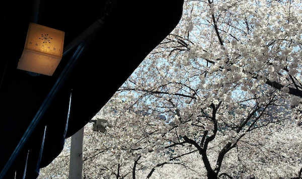 【満員御礼】info[第56回drinksひろしま@中目黒【hanabi】目黒川で花見を](3/28 sat開催)